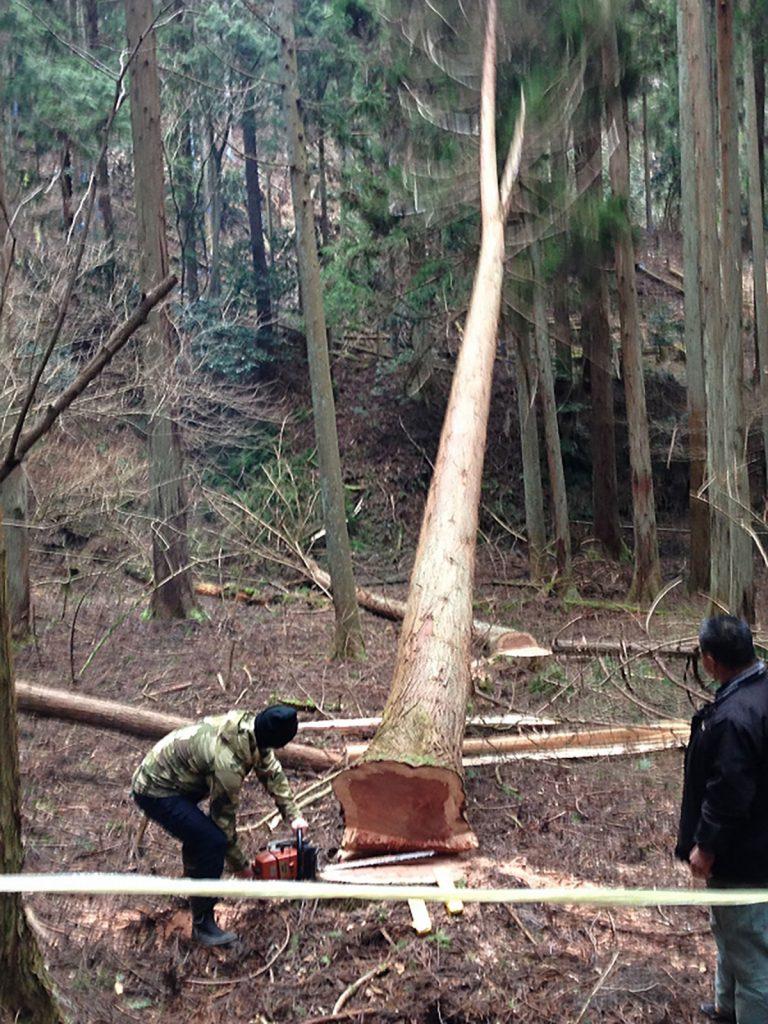施主さまの山の木を伐採する様子